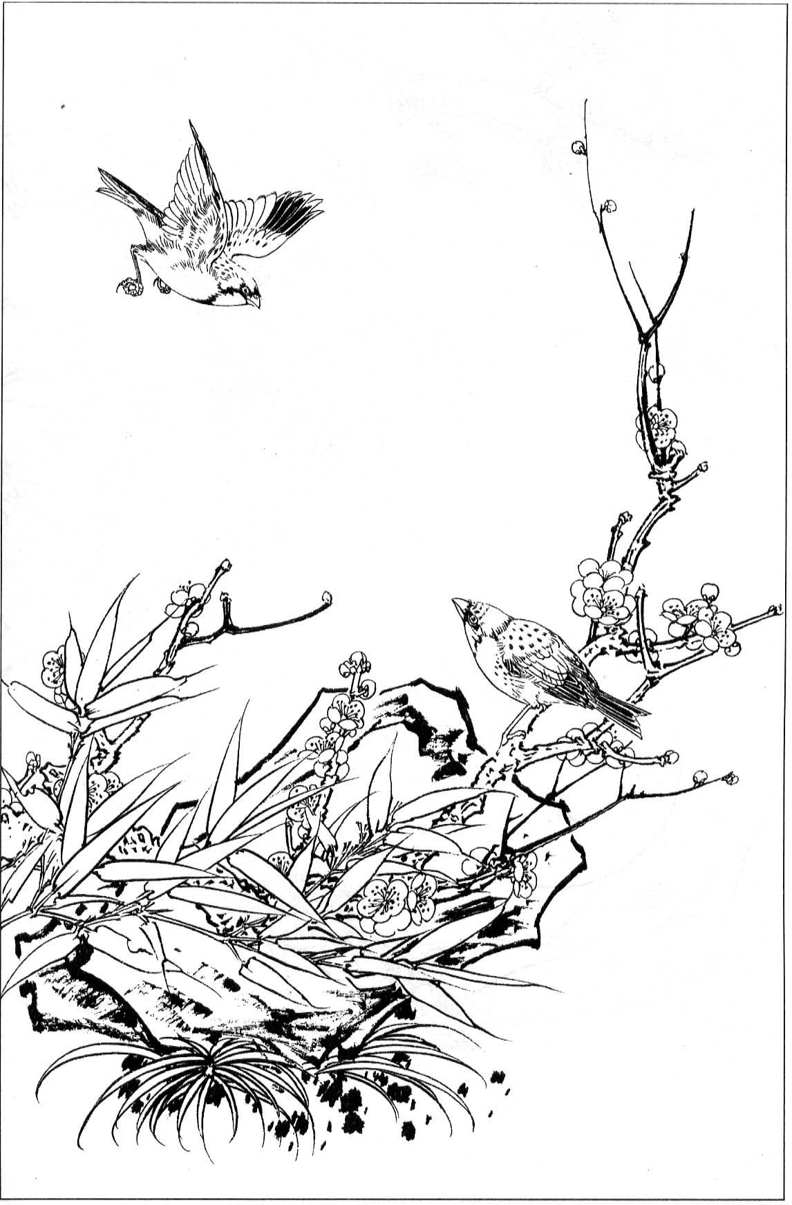 白描花鸟画图片/山水画白描/白描兰花