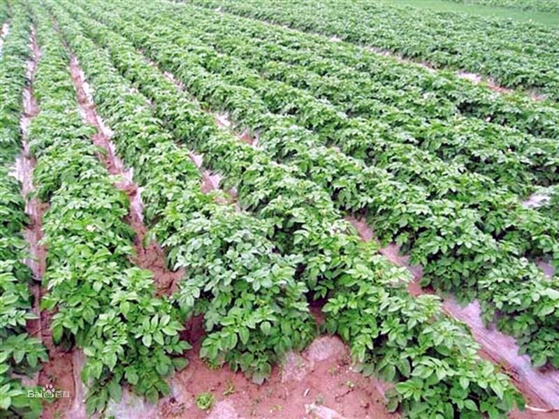 绿色农畜产品加工园区
