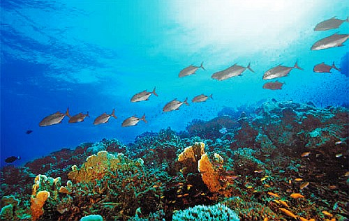 指海洋中蘊藏的經濟動物和植物的群體數量,是有生命,能自行增殖和不斷圖片