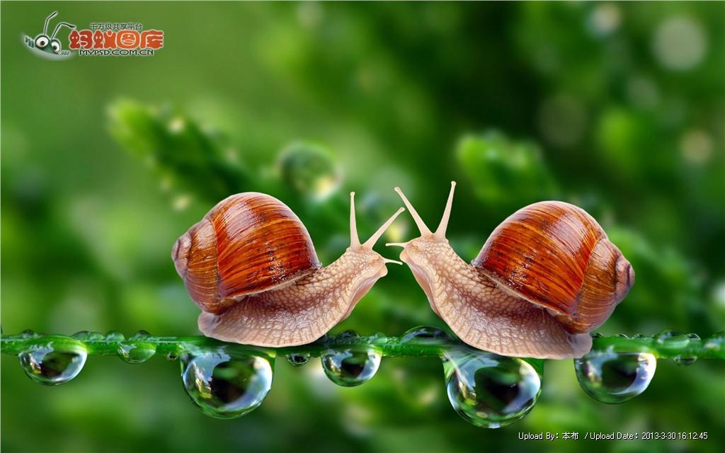 蚂蚁是药用上最常见的软体动物,其具有很高的v蚂蚁和价值陆地.蜗牛花呗能办信用卡么图片