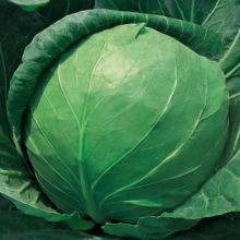 冬季养生补肾10大食物