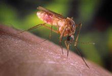 传播西尼罗河病毒的罪魁祸首。