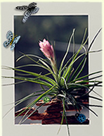 植物生态相框欣赏