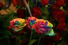 一大捧彩虹玫瑰