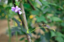 金卉庄园·蔬果采摘