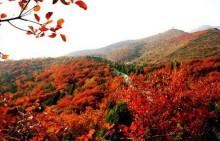 桐柏山黄岗红叶