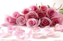 玫瑰(粉红)