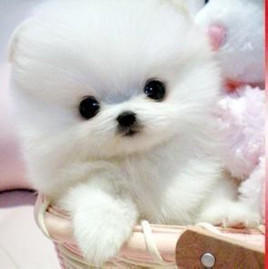 Small And Cute Dogs