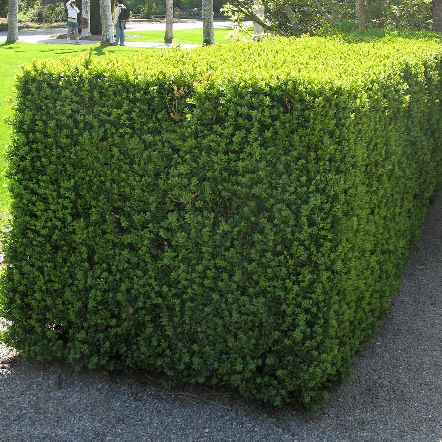 壁纸 成片种植 风景 灌木 绿化苗木 苗 苗木 树 植物 种植基地 桌面图片