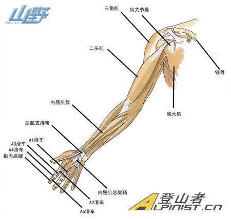 【运动】攀岩运动中常见的运动伤害图片