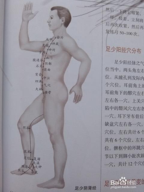肝胆经经络图