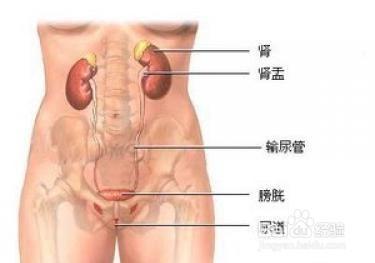 女性尿道口正常红图片