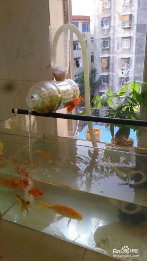 自制鱼缸简单过滤系统图片