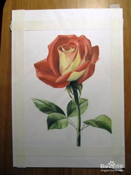 彩铅画玫瑰花教程图片