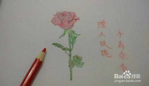 简笔画 手绘铅笔画 一枝红玫瑰