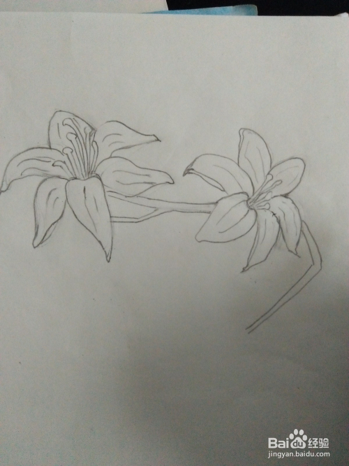 如何画百合花的简笔画