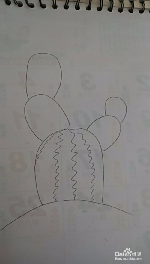 多妈简笔画植物仙人掌