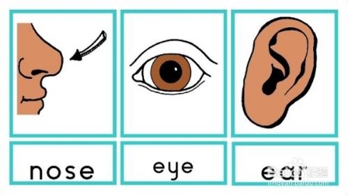 背英语单词的方法图片