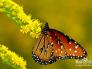 喜欢蝴蝶的人代表什么