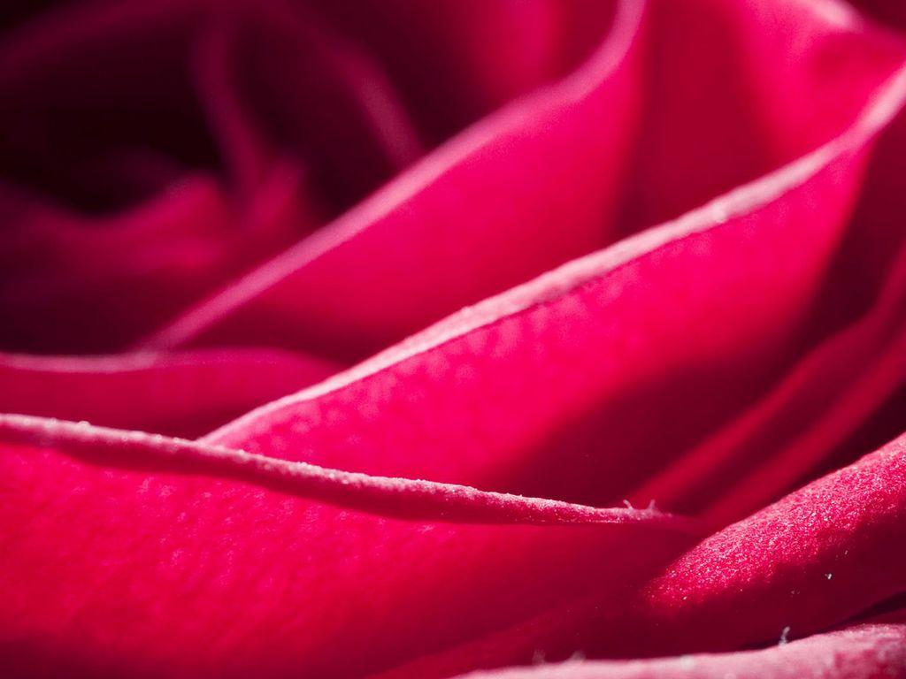 蓝色背景玫瑰图片 蓝色玫瑰图片 玫瑰图片背景 开心图库 玫瑰花图片 图片