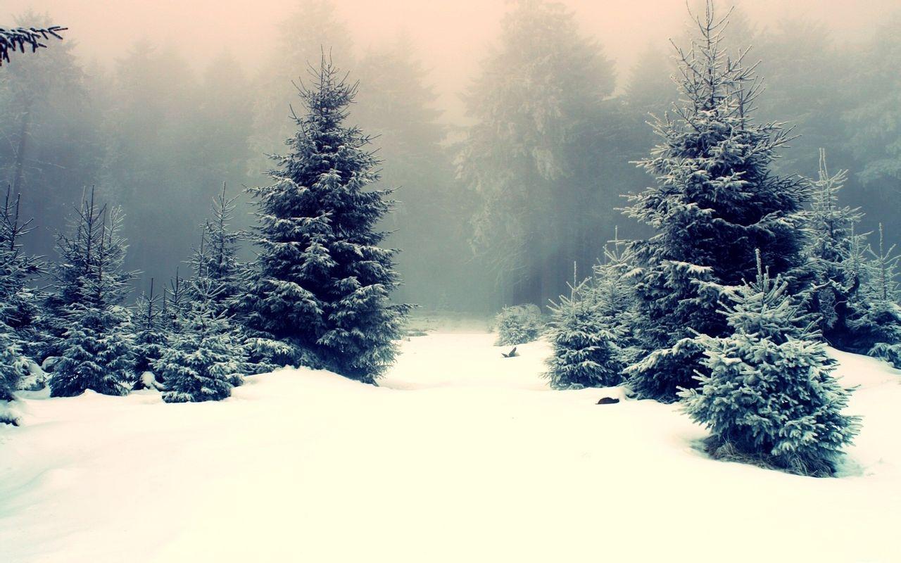 爱冰天雪地浪漫雪景自然风光桌面壁纸 三 ,是美桌网图片