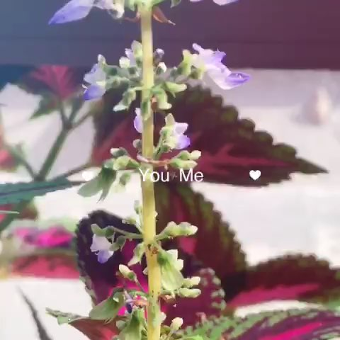 呐给你一朵小花表情包_呐给你一朵小花表情包_呐给你一朵小花表情包图片