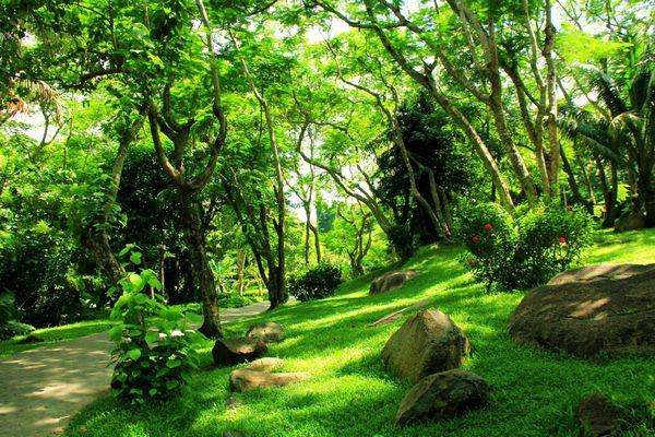 茂密的热带森林图片图片