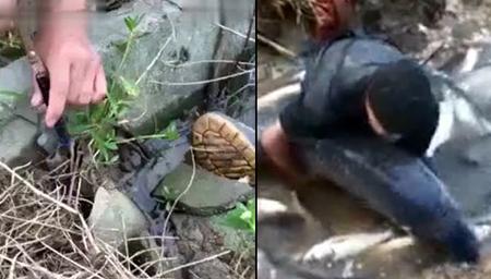 俩男子拿锄头沼泽地挖鱼 一不小心挖出大家伙