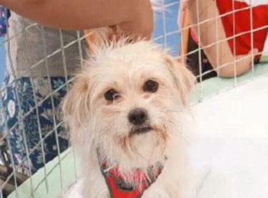 国内首只克隆狗亮相亚洲宠物展
