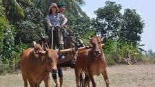 姚笛泰国驾牛车 反复复出刷存在