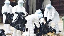 粮农组织称将采取措施减少寨卡病毒威胁