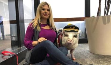 世上首只机场治疗猪,治愈你了吗?