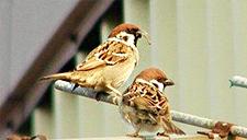 老夫妇偶遇麻雀变伴侣 人与动物和谐相伴