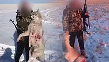 男子疑猎杀雪狼拍视频炫耀