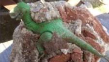 工地搬砖挖到完整恐龙化石 我这是要发的节奏么