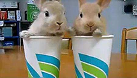 茶杯情侣兔子用鼻子交流心声~~