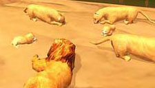 【狮子模拟器】草原狮子弱爆变病猫