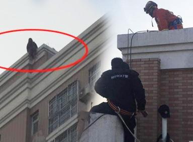 安徽一女主播整容失败从18楼跳下