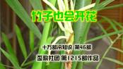 十万部冷知识:竹子也是会开花的