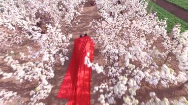 实拍山东乡村戏剧节,美女梨花林中跳舞弹琴,仙气十足!