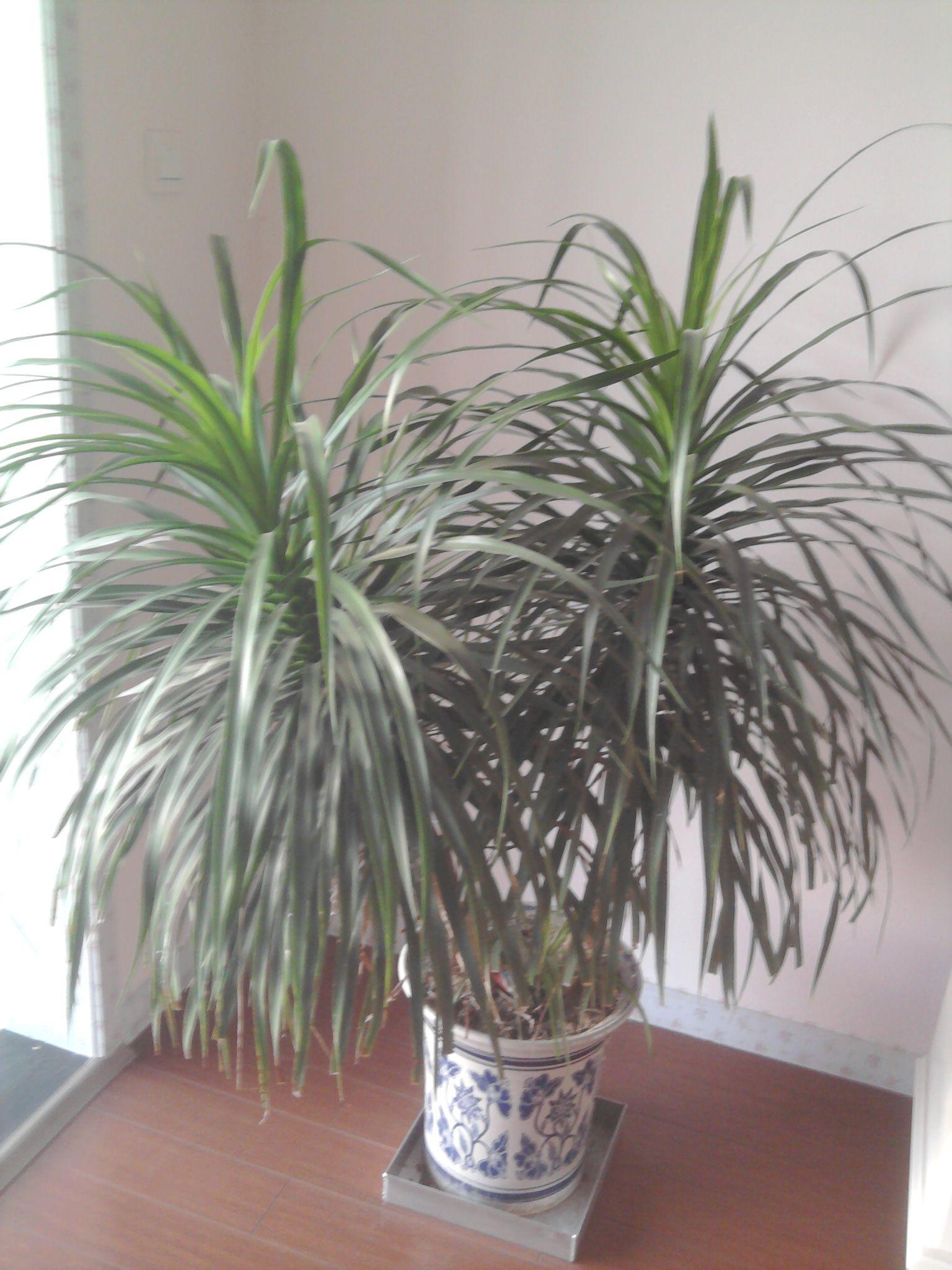 请教这两种绿植叫什么名字?谢谢!图片