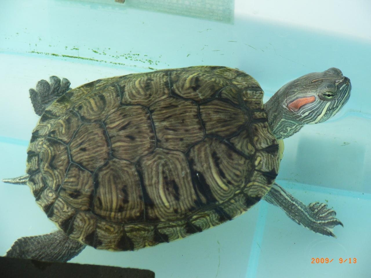 人物介绍 乌龟种类介绍 自动档位介绍