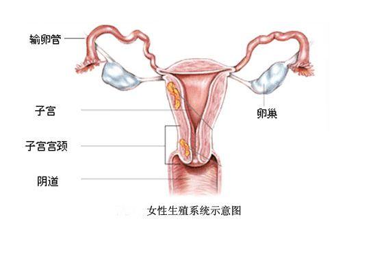 女人阴部被干图片_女性阴部是怎样才正常?