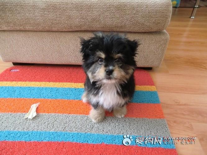 小型狗品种图片大全_