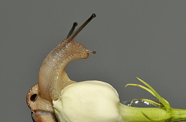 乌龟的高清膜,嫩叶,新芽,根端,也有的吃花,叶片,表层和吸食死亡花蕾动物枯枝大图图片