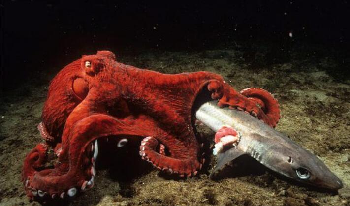 章鱼每分钟行驶米鳄鱼小顽皮9-19图片