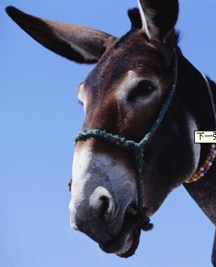 驴头跟马头的图片