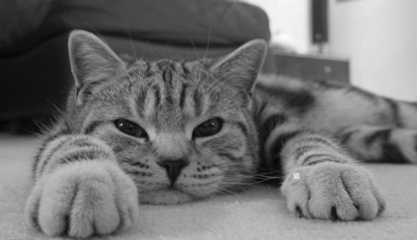 猫突然一直舔自己