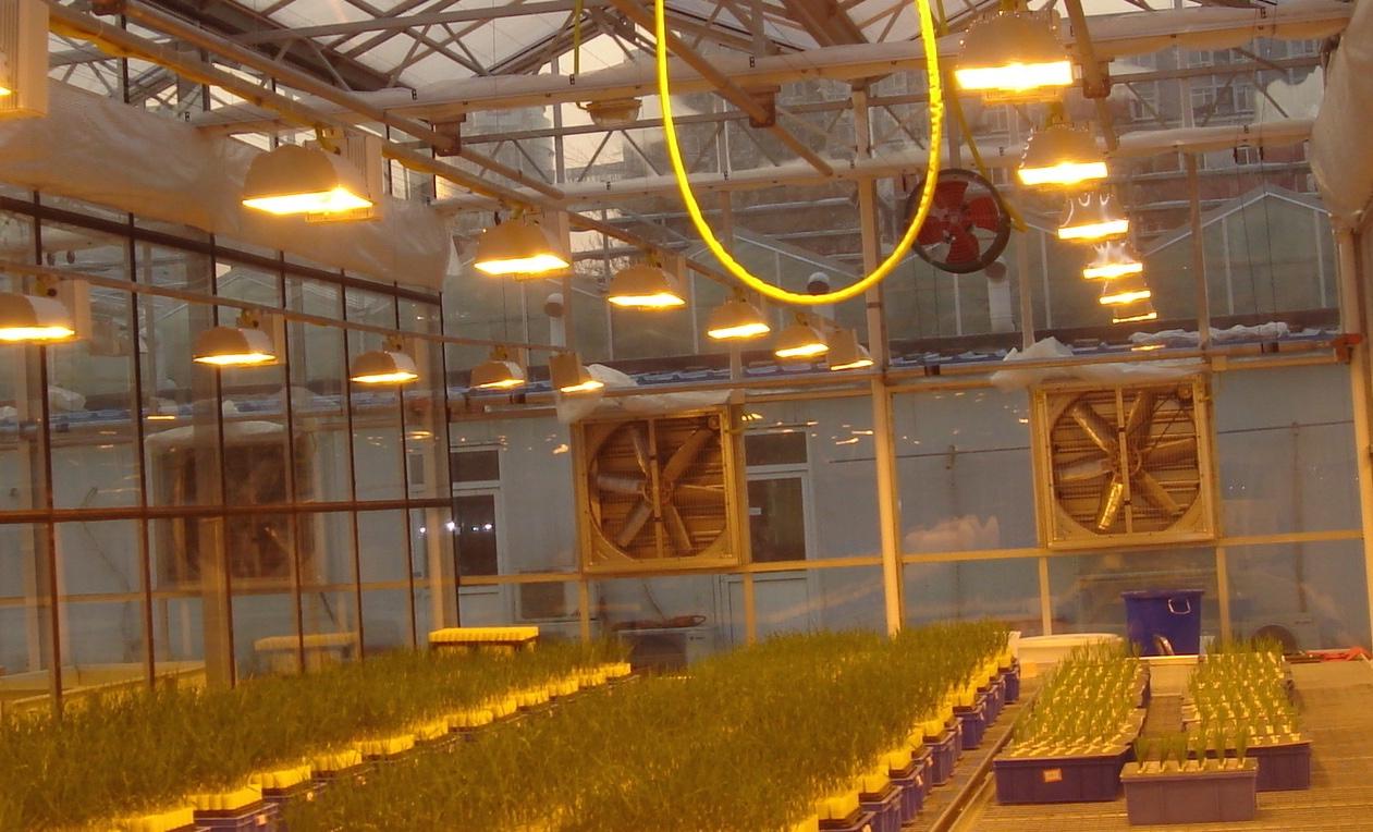 植物补光灯的作用