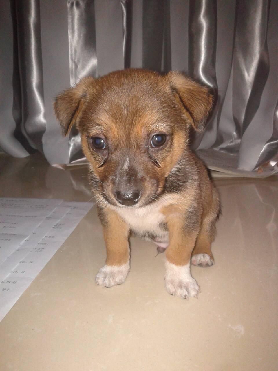狗狗品种加图片大全 狗狗品种及价格 小狗品种大全 狗狗品种大全及图